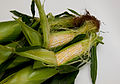 Corn is in (7603054546).jpg