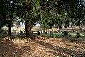 Cossall Churchyard - geograph.org.uk - 607925.jpg