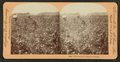 Cotton Plantation, Rome, Georgia, from Robert N. Dennis collection of stereoscopic views.png