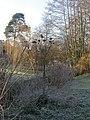 Coy Pond Gardens, cardoon heads - geograph.org.uk - 1113320.jpg