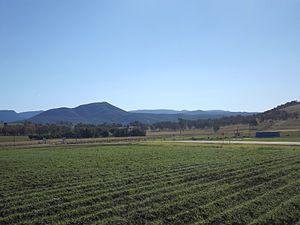 Fassifern Valley - Crops at Frazerview, 2015