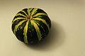 Cucurbita ornamental - Autumn Squash XV.jpg