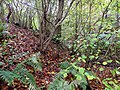 Cutting through a wood bank - Nov 2012 - panoramio.jpg