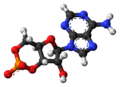 Cyclic-adenosine-monophosphate-anion-3D-balls.png