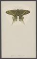 Cydimon - Print - Iconographia Zoologica - Special Collections University of Amsterdam - UBAINV0274 003 07 0022.tif