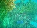 DSC00032 - Naufrágio e recifes de coral no Nilo.jpg