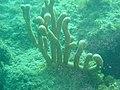 DSC00067 - recife de coral - Naufrágio e recifes de coral no Nilo.jpg