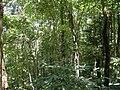 Dampa Tiger Reserve Forest.jpg