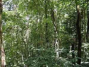 Dampa Tiger Reserve - Dampa Tiger Reserve Forest
