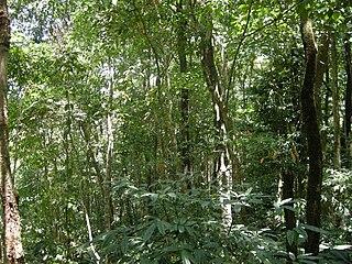 Dampa Tiger Reserve tiger reserve in Mizoram, India