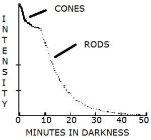 Accelerating dark adaptation in humans - Visual Response to Darkness