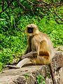 Daulatabad, Aurangabad - panoramio (28).jpg