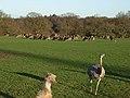 Deer park, Fawley - geograph.org.uk - 295274.jpg