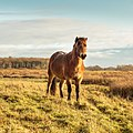 Delleboersterheide, natuurgebied van het It Fryske Gea. (d.j.b) 20.jpg