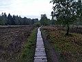 Der Moor Weg durch Struffel Heide.jpg