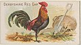 Derbyshire Red Cap, from the Prize and Game Chickens series (N20) for Allen & Ginter Cigarettes MET DP835066.jpg