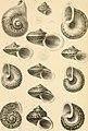 Die Preussische expedition nach Ost-Asien - nach amtlichen quellen. Zoologischer Theil (1867) (20915636386).jpg