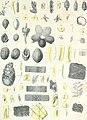Die im Bernstein befindlichen organischen Reste der Vorwelt, gesammelt (1845) (20779265646).jpg