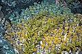 Diorama of a Devonian seafloor - corals, algae (30717354777).jpg