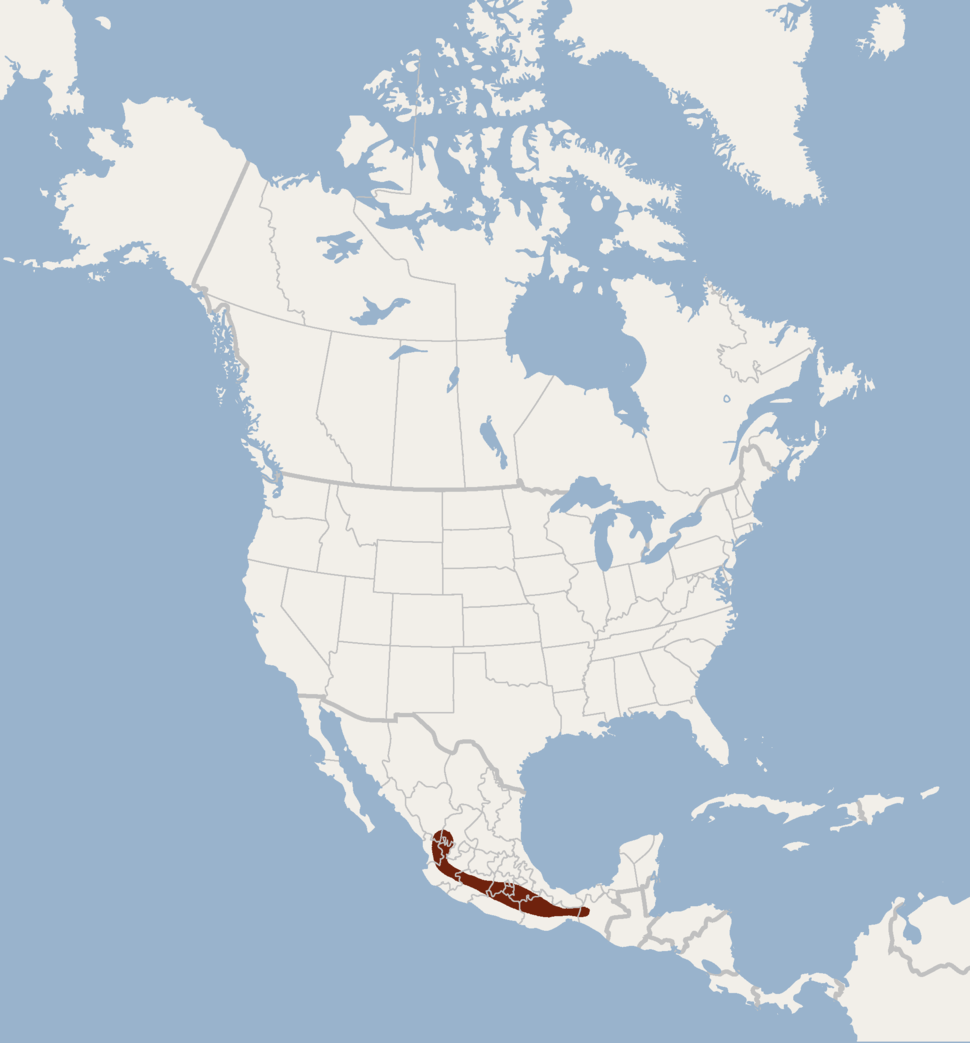 Distribution of Rhogeessa gracilis