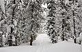 Divide-Spring Creek Trail (24992744937).jpg
