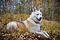 Dog (128484081).jpeg