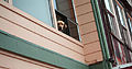 Dog in a Window (17563495808).jpg