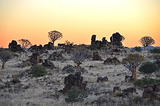 Diabase - Dolerite rocks and Quiver trees near Keetmanshoop (Namibia)