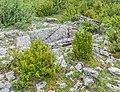 Dolmen de Saint-Martin-du-Larzac 3 (4).jpg