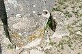Dougga ruins 12.jpg
