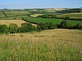 Downland, Sydling St Nicholas - geograph.org.uk - 908354.jpg