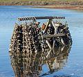 Drakes Bay Oyster Company - 03.jpg