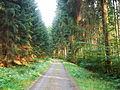 Dresdner Heide Waldweg.JPG