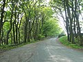 Drive to Rishworth Lodge, Rishworth - geograph.org.uk - 801937.jpg