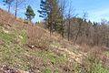 Duben vysenske kopce 29.jpg