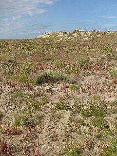 Grey dune