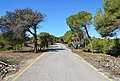 Dunes de Guardamar, carretera.JPG