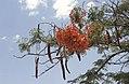 Dunst Namibia Oct 2002 slide360.jpg