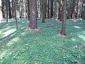 Dusetų sen., Lithuania - panoramio (124).jpg