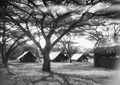 ETH-BIB-Camp Serengeti-Kilimanjaroflug 1929-30-LBS MH02-07-0505.tif
