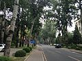 East Main Street in Tsinghua University 2.JPG