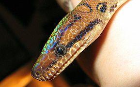 Le Serpent et tous ses symboles  dans SERPENT 289px-Ecc2