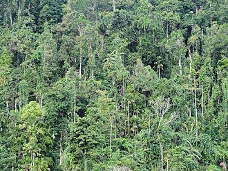 Aketajawe-Lolobata National Park - Forest at the edge of Aketajawe-Lolobata