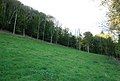 Edge of Fontmell Wood - geograph.org.uk - 589635.jpg