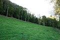 Edge of Fontmell Wood - geograph.org.uk - 589635.jpg