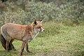 Een vos (22255280020).jpg