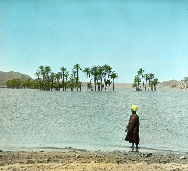 658px-Egypt%2C_Partly_submerged_palms_above_Nile_dam%2C_Upper_Egypt.jpg