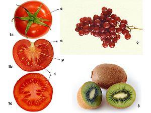caracteristicas de los frutos carnosos y secos
