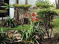 El Jardín Bolivariano (flores).JPG