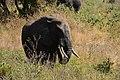 Elephants, Tarangire National Park (10) (28702336145).jpg